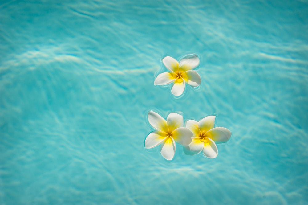 flores para fiesta en la piscina