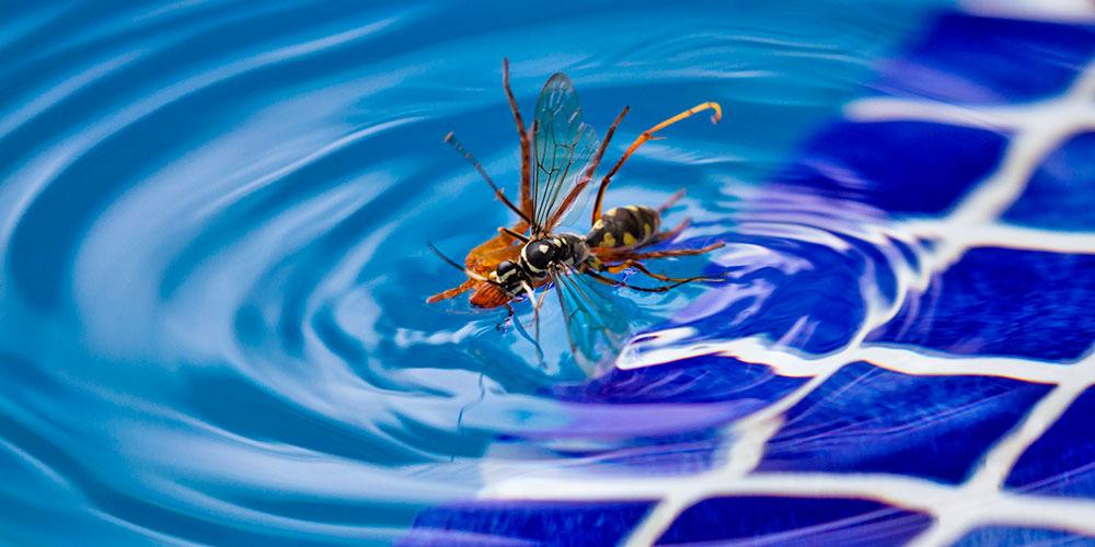 Remedios caseros para ahuyentar avispas del agua