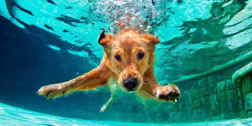 Perros en las piscinas